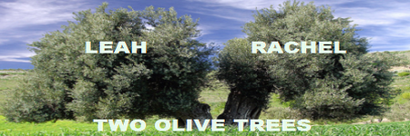 Rachel and Leah Two Olive Trees
